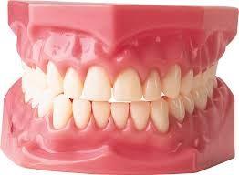 Bocca, denti e dintorni